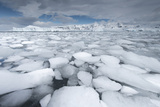 Sea Ice Floats in Fournier Bay  Antarctica