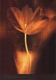 Bronze Tulip I