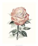 Beholden Rose I Giclée par Grace Popp