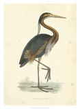 Vintage Purple Heron Giclée par Morris