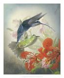 Hummingbird Cycle II