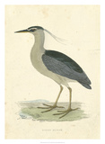 Vintage Night Heron