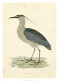 Vintage Night Heron Giclée par Morris