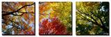 Arbres aux couleurs automnales, vus de dessous Tableau multi toiles par Panoramic Images