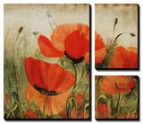 Poppy Daze Tableau multi toiles par Farrell Douglass