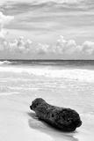¡Viva Mexico! B&W Collection - Tree Trunk on a Caribbean Beach III