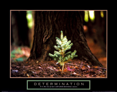 Determination: Little Pine Art Print