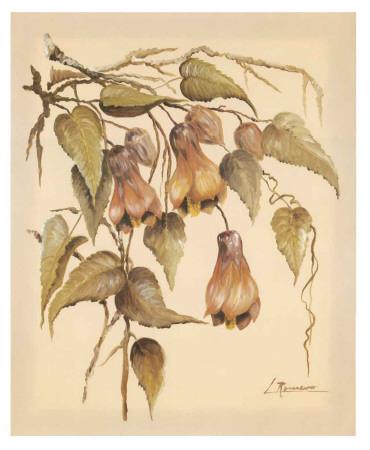 Flores Colgantes III Art Print
