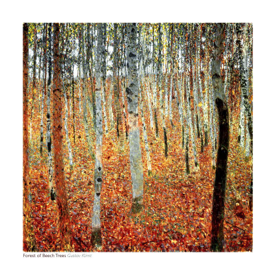 Forest of Beech Trees, c.1903 - Art Print