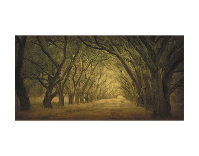 Evergreen, New Alley, Right Side Art Print