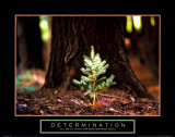 Determination: Little Pine This is Your Life Imagination Keep Your Eyes on the Stars and Your Feet on the Ground Fearless Girl Wall Street Be Kind Be You, Be Different Gym - Motivational Open Your Mind California Rising Watch Your Thoughts Motivational Poster Make Art Not War