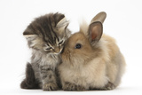 Tabby Kitten, 10 Weeks, and Young Rabbit Clinique Cheron, c.1905 Peekapoo (Pekingese X Poodle) Puppy, Ginger Kitten and Sandy Lop Rabbit, Sitting Together Irises and Sleeping Cat, 1990 Cuddles (Sleeping Puppy and Kitten) Art Poster Print Dogs and Cats