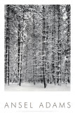 Pine Forest in Snow, Yosemite National Park, 1932 Gilding Denali National Park Ski Trails in Snow Winter Birch Woods in Morning Light
