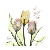 Tulip Love Words to Live By: Love Is Patient Live, Laugh, Love Live Laugh Love: Sunflower Live, Love and Laugh Live Laugh Love: Sunflower Words to Live By: Love Live Laugh Love (gold foil) Live Laugh Love Words to Live By: Love Live Every Moment Live Love Laugh Peel & Stick Wall Decals Live Laugh Love - Black Live Well-Love Often-Love Much Peel & Stick Single Sheet Live Well, Love Much, Laugh Often Live Laugh Love - White