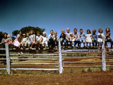 Children of Rancher Tom Hall Lined up on Fence