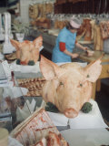 East German Butcher Shop  Displaying Whole Pigs Heads