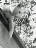 Cat Owned by Olympic Track Star Harold Connoly and Family