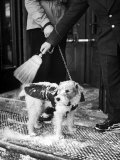 Dog Gets Snow Brushed from His Coat by Hotel Doorman