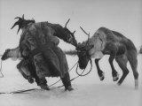 Lapp Struggling to Harness One of His Reindeer Papier Photo par Mark Kauffman