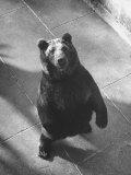 Bear Pit at Berne