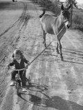 Little Girl Riding Her Tricycle  Leading Francis the Mule