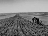 Farmer Lossening Top Soil of His Field