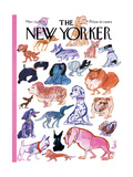 The New Yorker Cover - March 21  1970