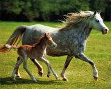 Baby Domestic Animals