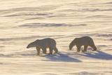 Wapusk National Park