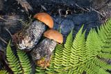 NaturePhotography