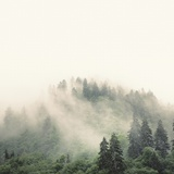 Forests & Mountains