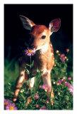 Deer by Species
