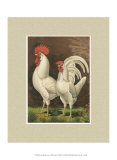 Cassell's Poultry Book
