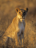 Wild Cats (Nature Picture Library)