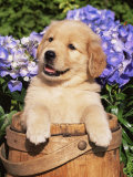 Puppies (Nature Picture Library)