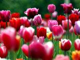 Floral & Botanical (Associated Press)