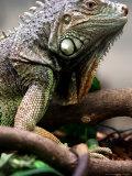 Lizards by Species