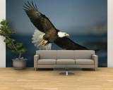 Birds Natl. Geo.