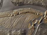 Fossils Natl. Geo.