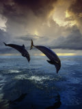 Sea Creatures (Index Stock Imagery)
