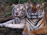 Wild Animals (Index Stock Imagery)