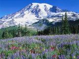 Mt. Rainier Nat`l Park