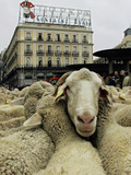 Animals (Associated Press)