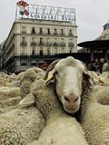 Animals (Associated Press)