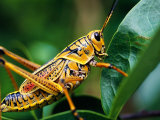 Insects Lonely Planet