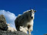 Animals (Serac Adventure Films)