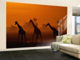 Wall Murals (Natl. Geo.)