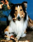 Lassie (Television)