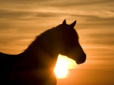 Horses (Nature Picture Library)