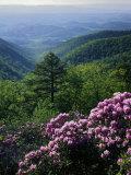 Floral & Botanical (Danita Delimont)